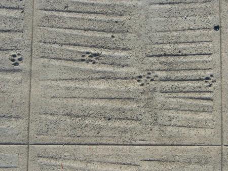 dogtracks